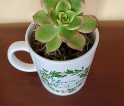 """Succulent in Mug """"Bloom Where You Are Planted"""", ceramic white planter Plant Gift image 3"""
