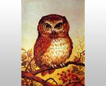 000000 small barn owl thumb155 crop