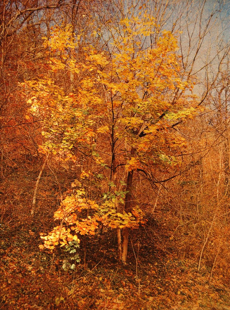 152542 small golden tree