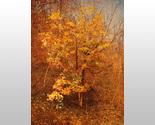 152542 small golden tree thumb155 crop