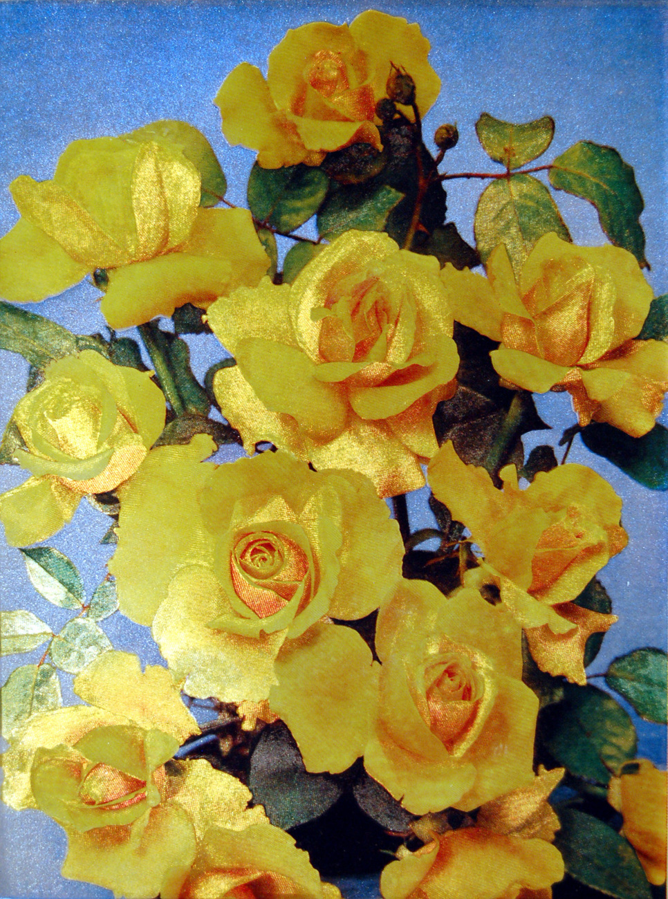 W9850m grandmere jenny roses