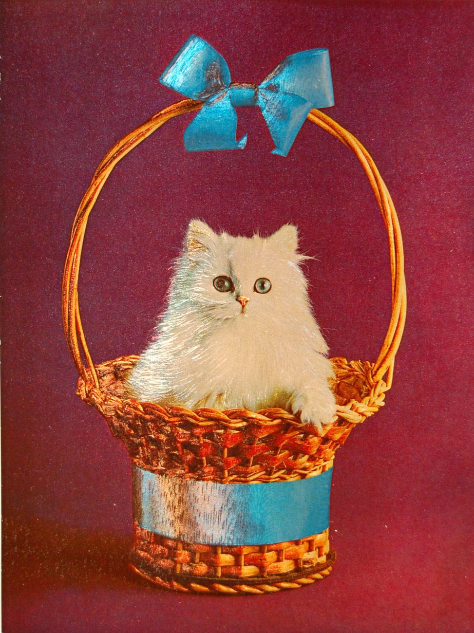 W6012m kitten in blue basket