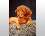 159411 puppy on shag rug thumb155 crop
