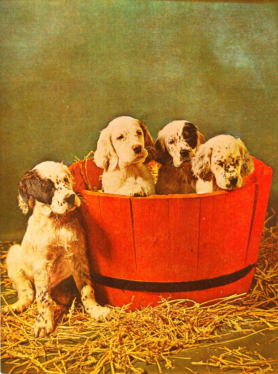 W5242m puppies in barrel