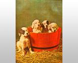 W5242m puppies in barrel thumb155 crop