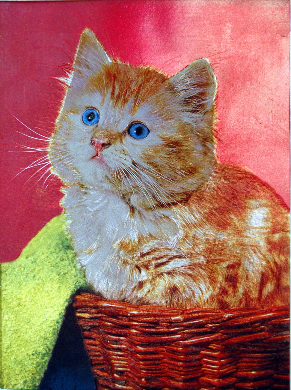 W5102m kitten in basket