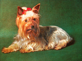 Puppy with Red Bow (Dufex Foil Print #W9884M) - $4.99
