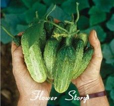 20 Mouth crisp cucumber seeds of new varieties of fruits and vegetables - $2.00