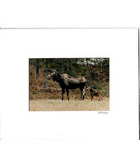 MOOSE Protecting Her Yound Matted Picture Jim Stamates Collection New  - $16.82