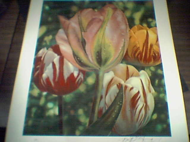 "Brett Livingstone Strong ""Tulip""   limited signed"