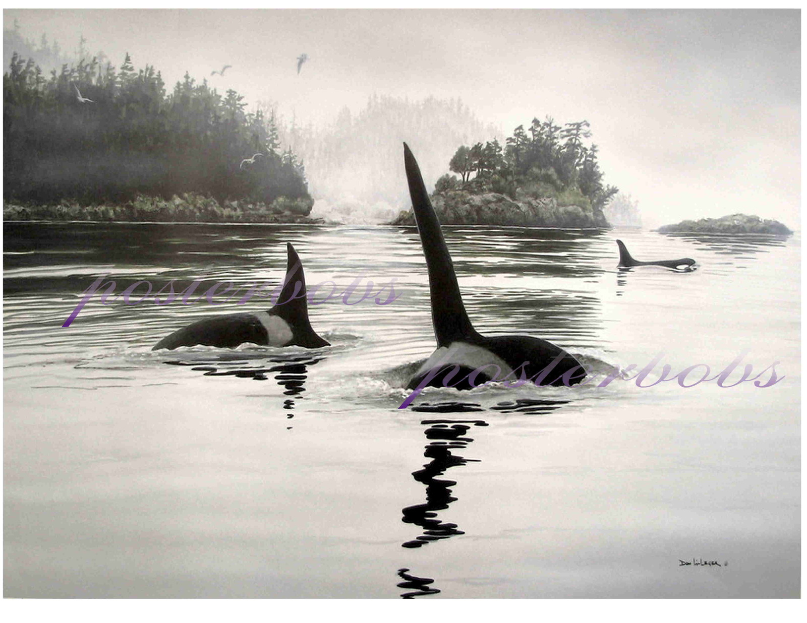 The Orcas  (A Limited Edition )  by Don Li-Leger
