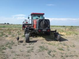 2004 Case IH WDX 1002 S For Sale in Alomosa, Colorado 81101 image 3