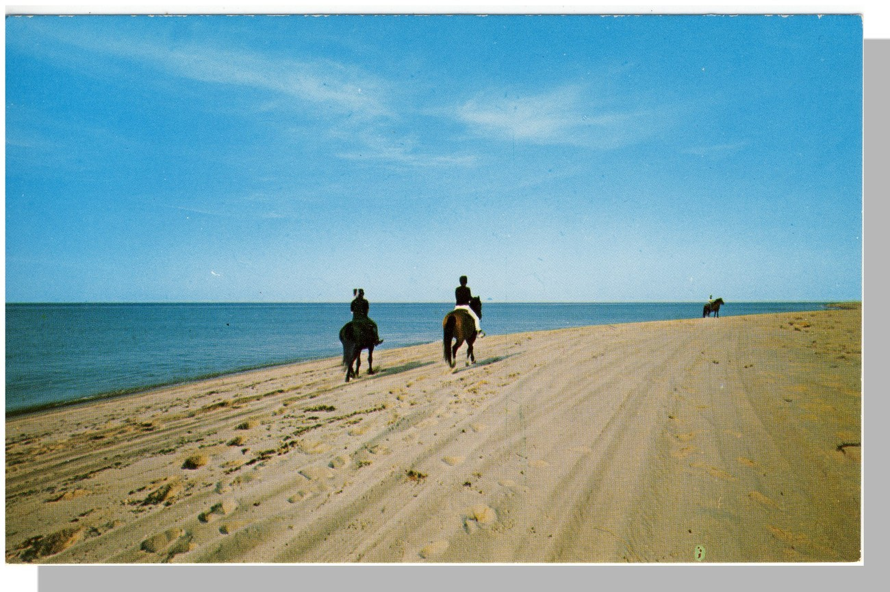 Cape Cod, Mass/MA Postcard, Beach/Horse Trail