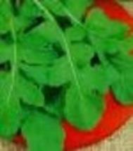Herb - Arugula Rouquette - Non-Hybrid - Non-GMO - St. Clare Heirloom Seeds - $1.49