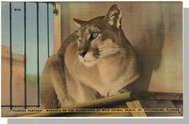 St Petersburg, Florida/FL Postcard, Panther/Wild Animal Ranc - $7.00