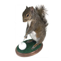 Golfing Squirrel Professional Taxidermy Mounted Animal Statue Home Gift  - $264.99