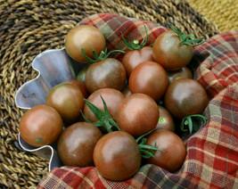Chocolate Cherry Tomato 20 SEEDS - COMBINED - $15.48