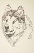 Alaskan Malamute Signed Dog Art Print #40 Stephen Kline adds your dogs n... - $49.95