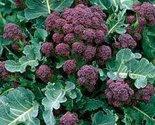 614haaof2cl. sl1500  thumb155 crop