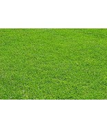 Creeping Red Fescue Fully Tested, Quick Germination Festuca Rubra 1 LB - $13.11