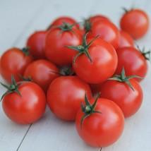 Gardeners Delight Cherry Tomato Seeds - Very Sweet and Vigorous! - $2.99+