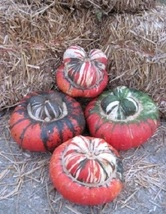 SHIPPED FROM US 20 American Turk's Turban Squash / Gourd Seeds, LC03 - $19.00