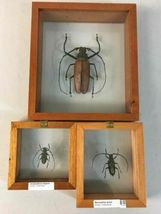 Insect Entomology Lot Collection 36pc Specimen Scorpion Lantern Fly Beetle image 7