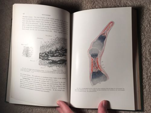 1915  A LABORATORY MANUAL AND TEXT-BOOK OF EMBRYOLOGY  368 Illustrations  GREAT!