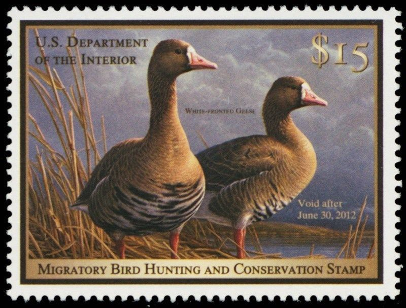 RW78, 2011 White-Fronted Geese Federal $15 Duck Stamp Mint NH - Stuart Katz