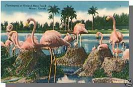 MIAMI, FLORIDA/FL POSTCARD, Hialeah Track/Flamingoes - $5.00