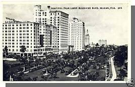 MIAMI, FLORIDA/FL POSTCARD, Biscayne Blvd/Palm Trees - $6.00
