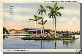 MIAMI, FLORIDA/FL POSTCARD, Hialeah Club/Flamingoes - $4.50