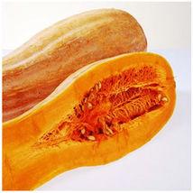 8 Golden Hook Pumpkin Seeds Cucurbita Moschata Organic Vegetables - $13.58