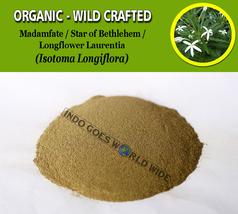 POWDER Madamfate Star of Bethlehem Longflower Laurentia Isotoma Longiflora - $7.85+