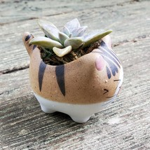Cat Planter + Ghost Succulent, Kitten Ceramic Pot, Graptopetalum Paraguayense image 6