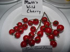 Matt's Wild Cherry Tomato! 20 SEEDS! HUNDRED'S OF TINY TOMATOES! COMB S/H - $15.48