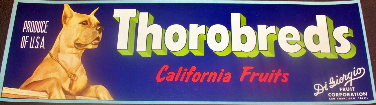 I Want One! Thorobreds Crate Label, 1940's