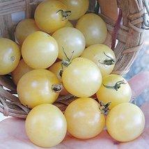 10 Seeds of Coyote Tomato - $18.81