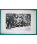 MEXICO Chapultepec Cypress Trees - 1891 Antique Print Engraving - $20.25