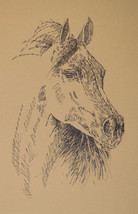 Arabian Horse Art Print Lithograph #38 DRAWING FROM WORDS Kline adds nam... - $49.95