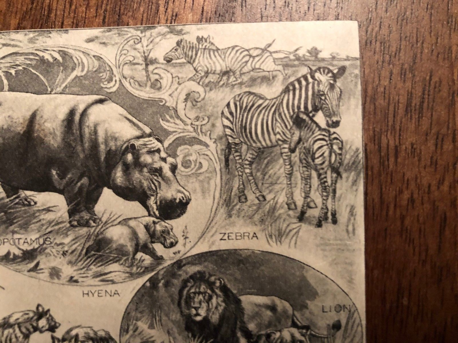 "Vintage Engraving Print of AFRICAN ANIMALS Giraffe Zebra Lion Unframed 3"" x 4"""