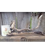 DRIFTWOOD FOR AQUARIUM CRAFTS REPTILES WALL ART FROM ROCKY MOUNTAINS USA... - $11.95