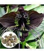 10pcs Rare Black Bat Tacca Chantrieri Whiskers Flower Seeds Garden Plant... - $12.55