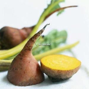 20 Stücke Garten Top Große Heirloom Gemüse Detriot Dark Red Rüben Samen DL0