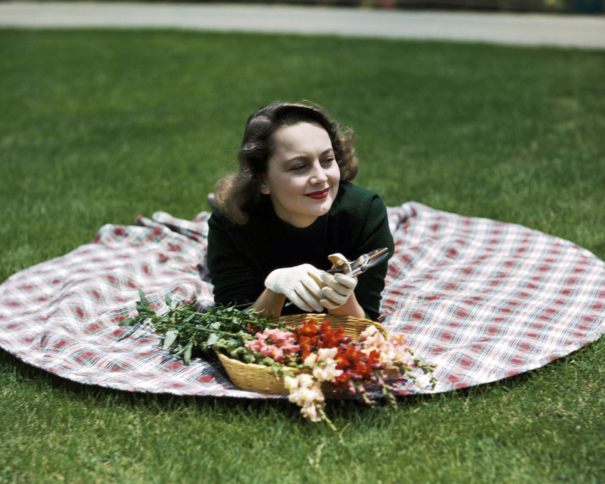 Primary image for Olivia De Havilland Lying on Grass with Flowers 1940's Rare 16x20 Canvas