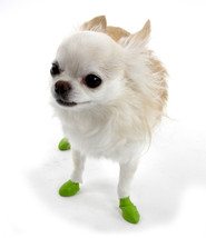 Light Green Pawz Water Proof Dog Boots Tiny - $11.99