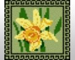 Daffodilpt thumb155 crop