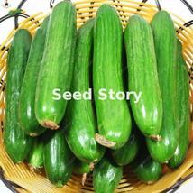 50Pcs Japanese Rare Cucumber Bonsais Cucumis (13), HZ Healthy Vegetable ... - $8.89