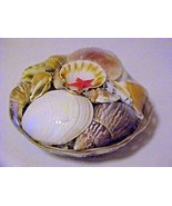 Basket of Real Seashells Clean Lot - $6.92