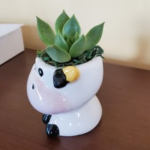 Cow Planter with Succulent, Live Plant Gift, Echeveria Agavoides, Farm Animal image 5